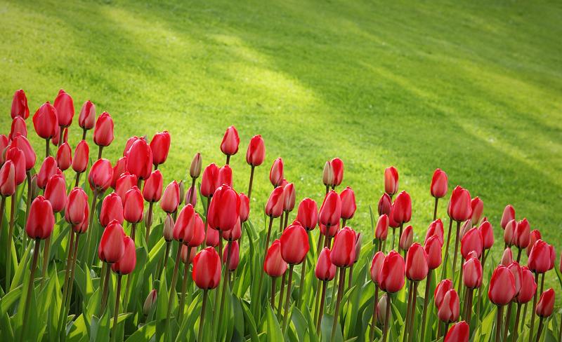 7 conseils pour votre gazon au retour du printemps - Engrais gazon printemps ...