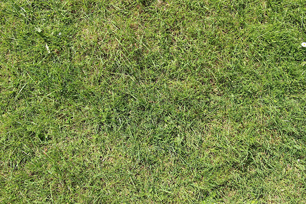 7 conseils pour votre gazon au retour du printemps for Temps de germination gazon